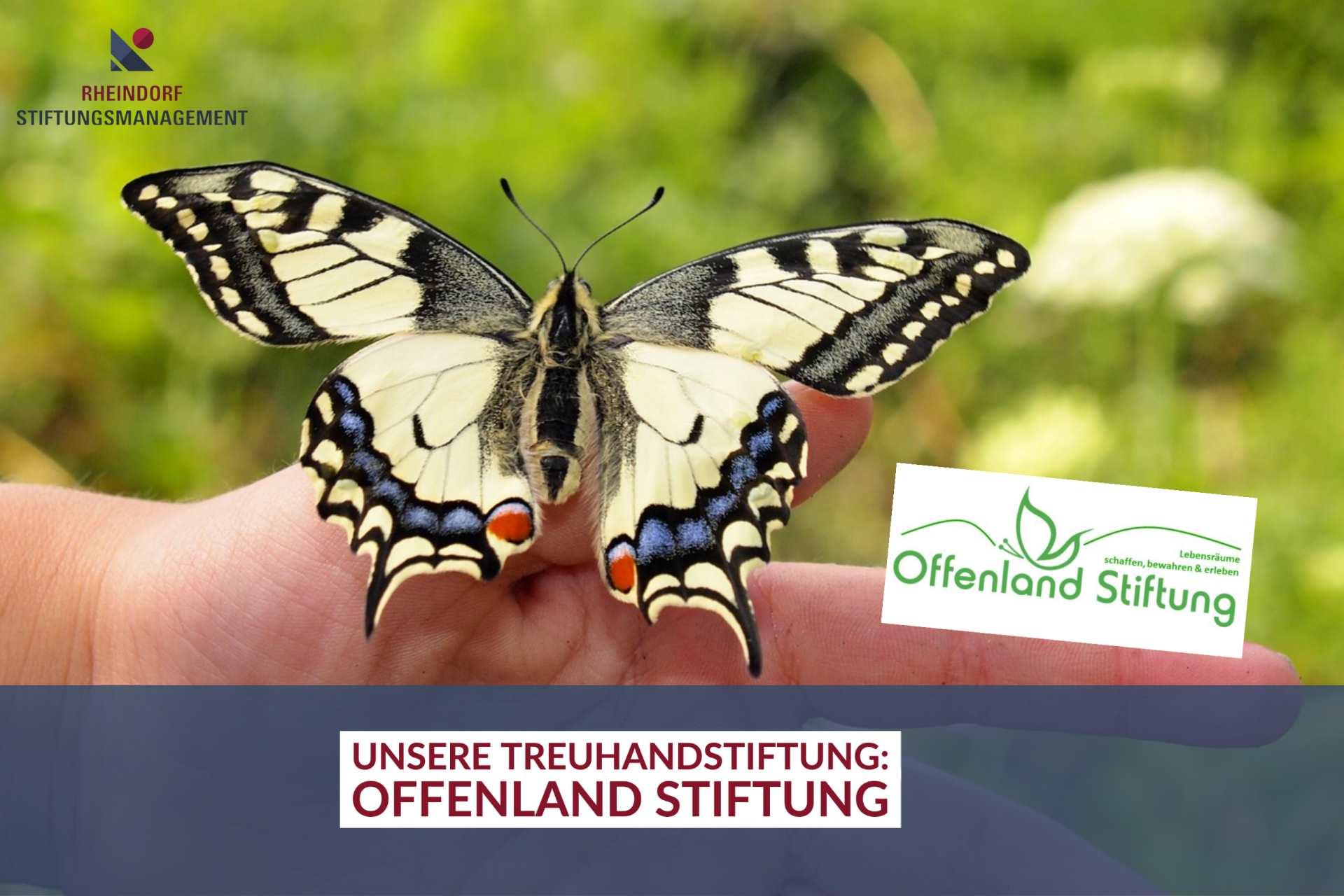 Offenland Stiftung: Corona fördert den Sinn für Natur- und Artenschutz